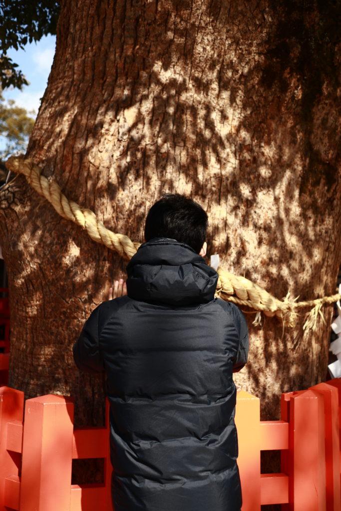宇佐八幡宮、エグザイルUSAさん願掛けのご神木