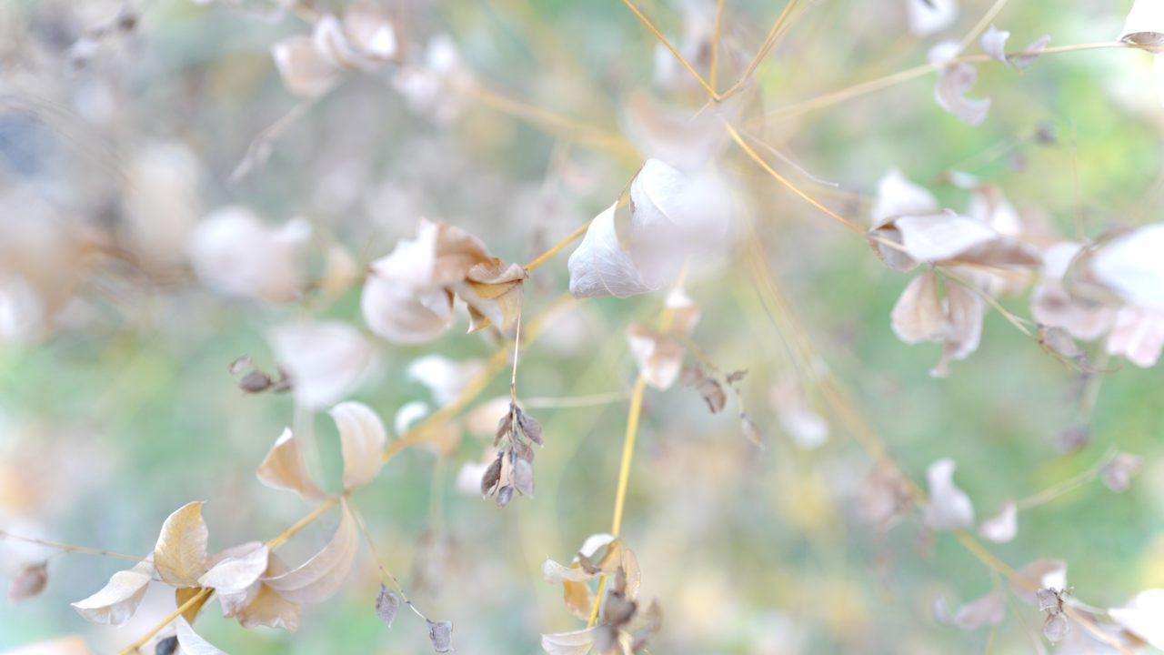 ライカQで撮る秋の風景