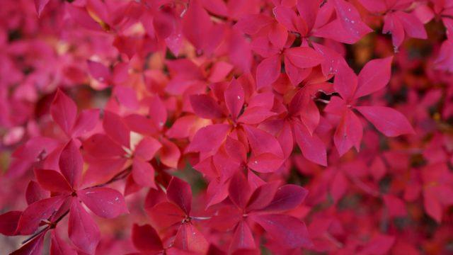 LeicaQで紅葉撮影