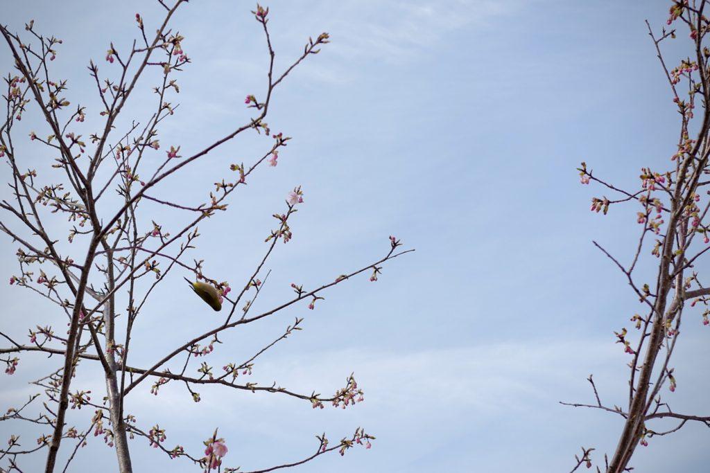LeicaQ作例:上野公園不忍池