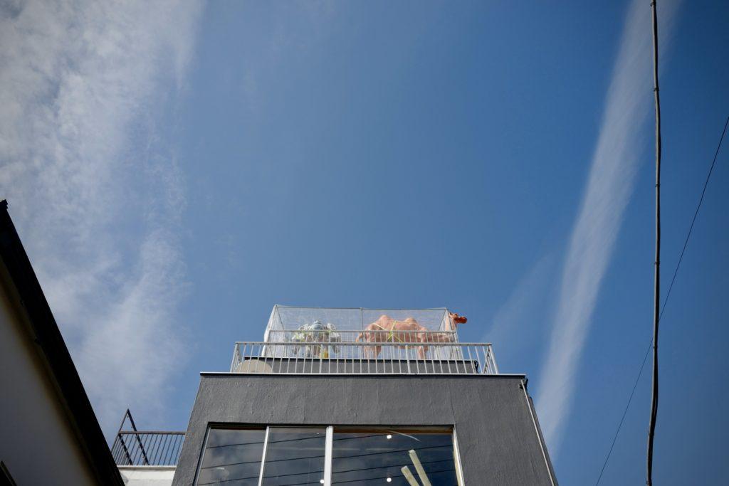 LeicaQ作例:西日暮里富士見坂から谷中銀座へ