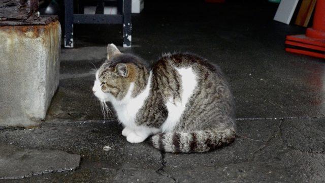 LeicaQ作例:沼津港「むすび屋」のネコ