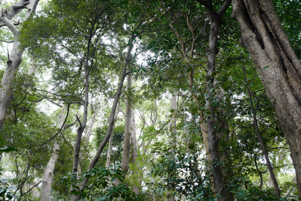 真鶴半島一周ハイキング 「お林」の遊歩道