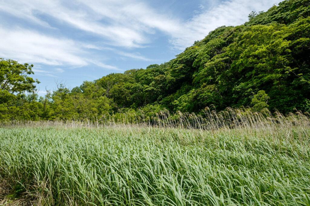 三浦半島三崎口「小網代の森」日帰り旅レポート