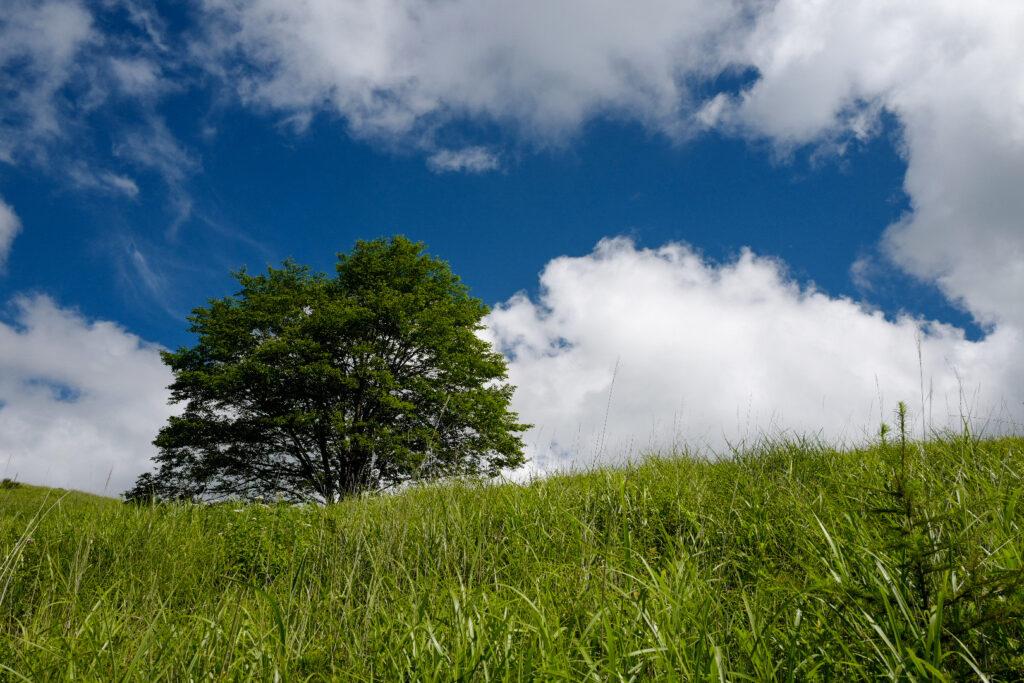 夫婦ふたり長野ドライブ旅1泊2日:霧ヶ峰